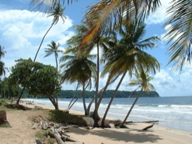 Trinidad and Tobago private tours photo