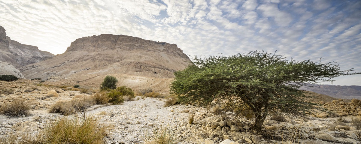 Private Tours in Masada