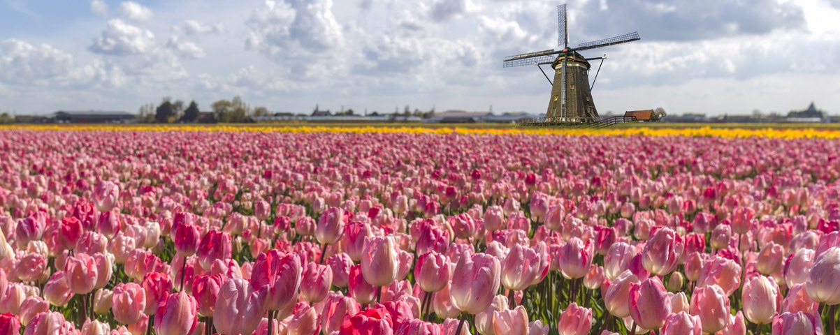 Private Tours in Netherlands