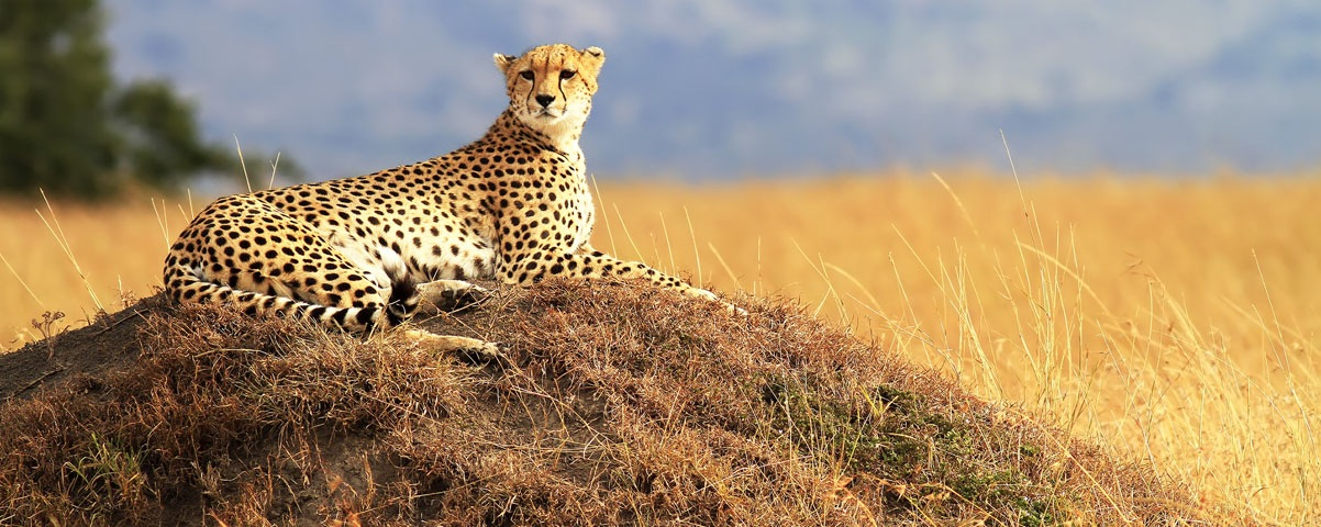 Private Tours in Kenya
