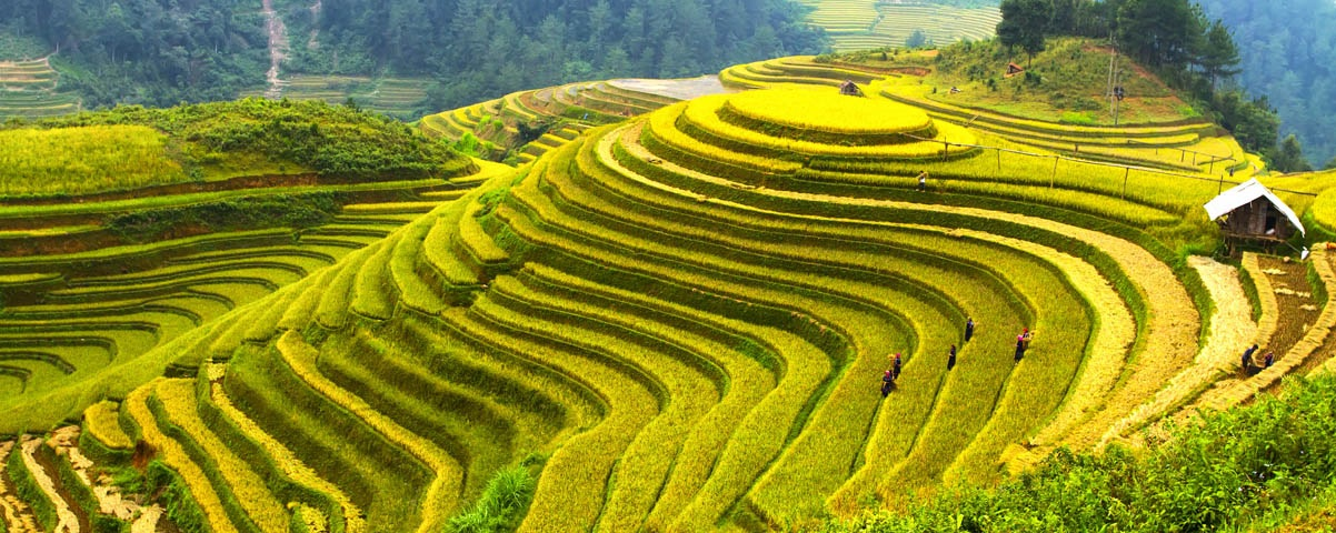 Private Tours in Vietnam