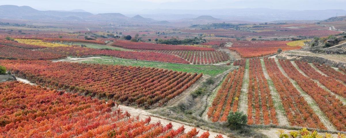 Private Tours in La Rioja