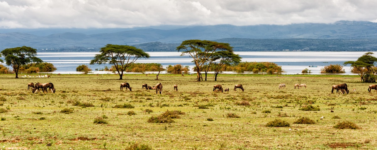 Private Tours in Nairobi
