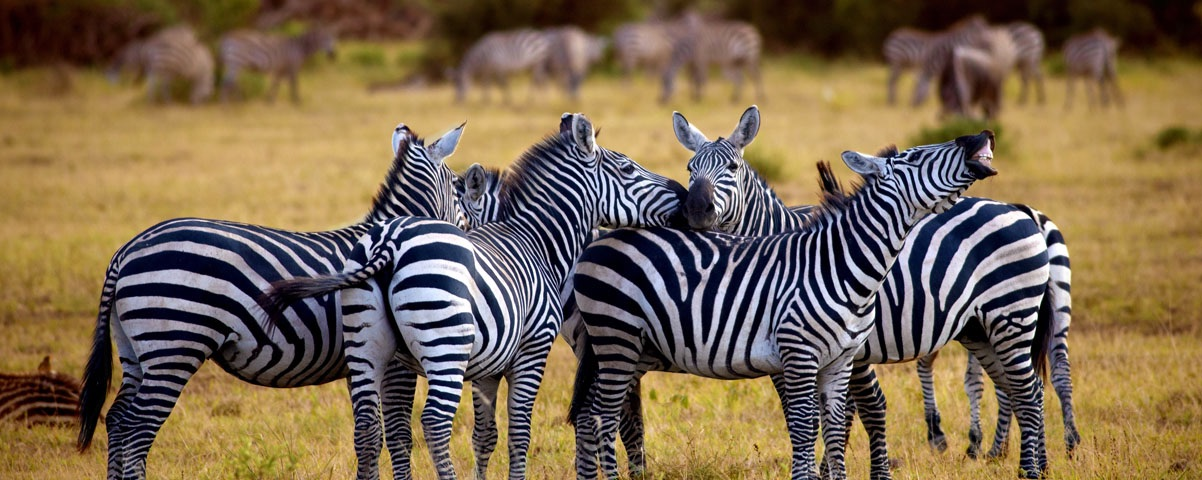 Private Tours in Arusha