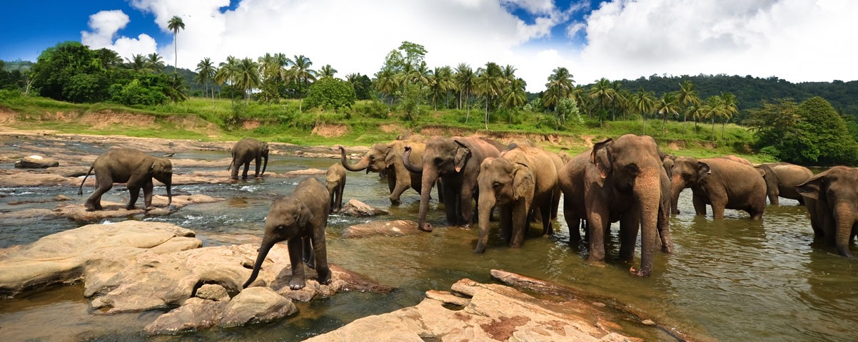 Private Tours in Kandy