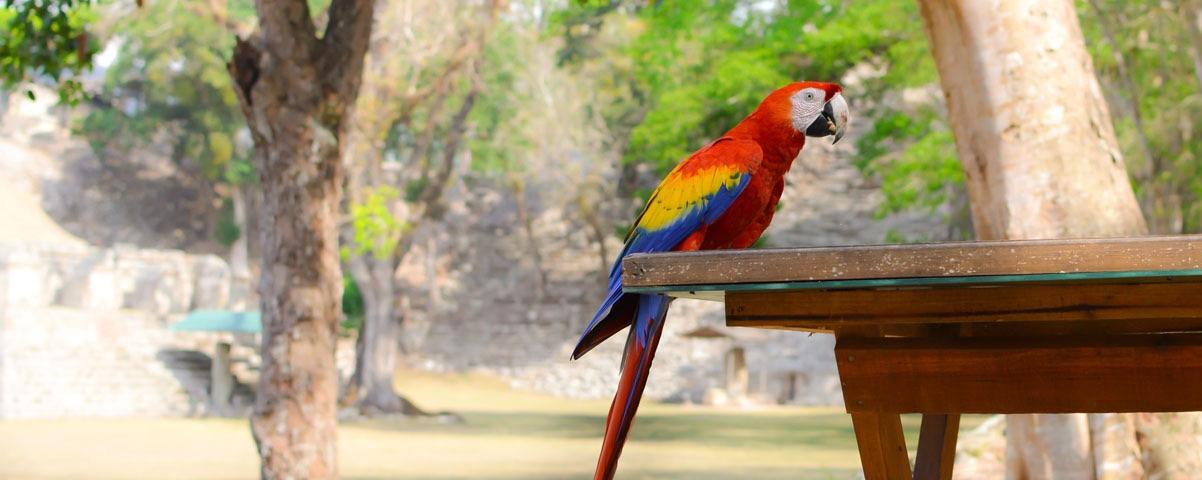 Private Tours in Honduras
