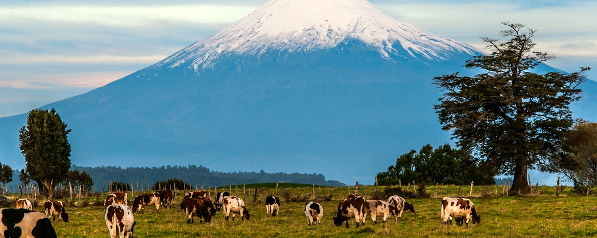 Private Tours in Puerto Montt