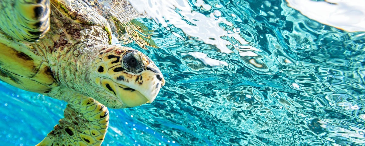 Private Tours in Bahamas