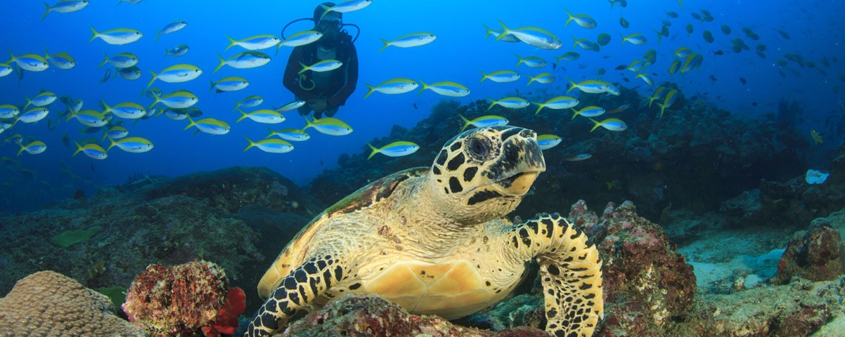 Private Tours in Cozumel