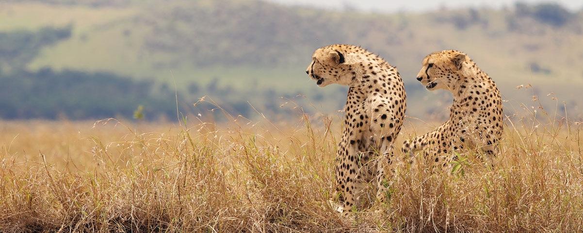 Private Tours in Masai Mara