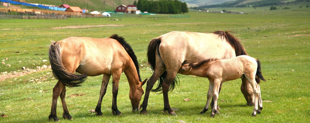 Private Tours in Inner Mongolia