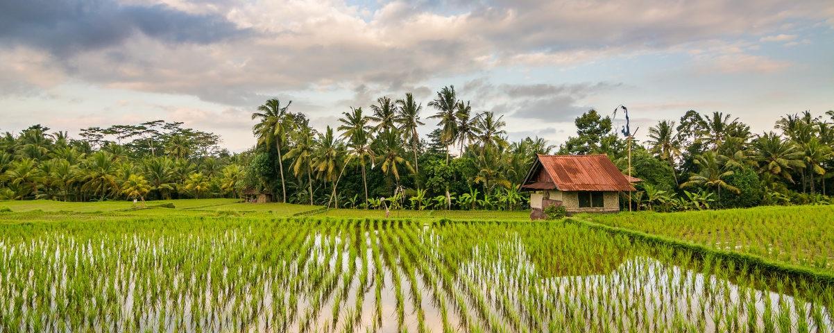 Private Tours in Solo Surakarta