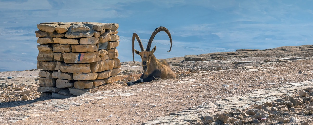 Private Tours in Mitzpe
