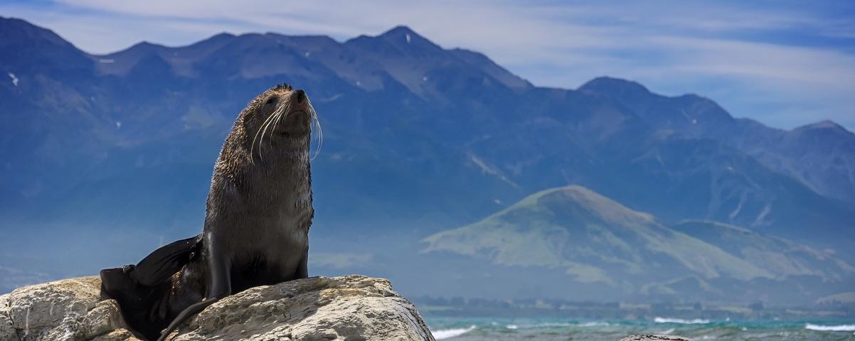 Private Tours in Kerguelen Islands