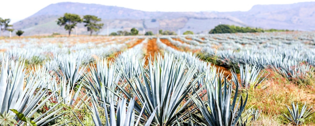 Private Tours in Tequila