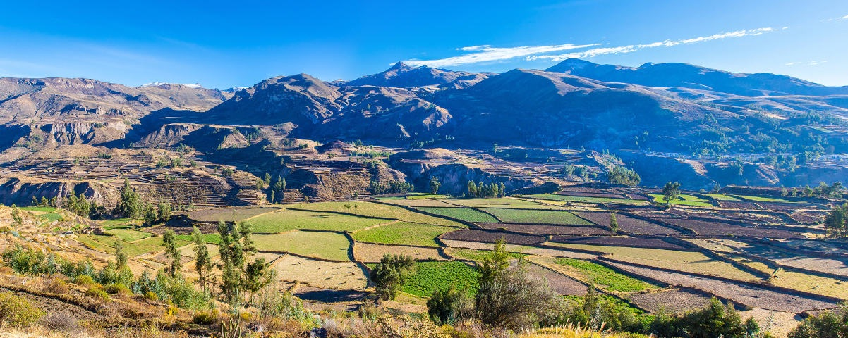 Private Tours in Colca Canyon