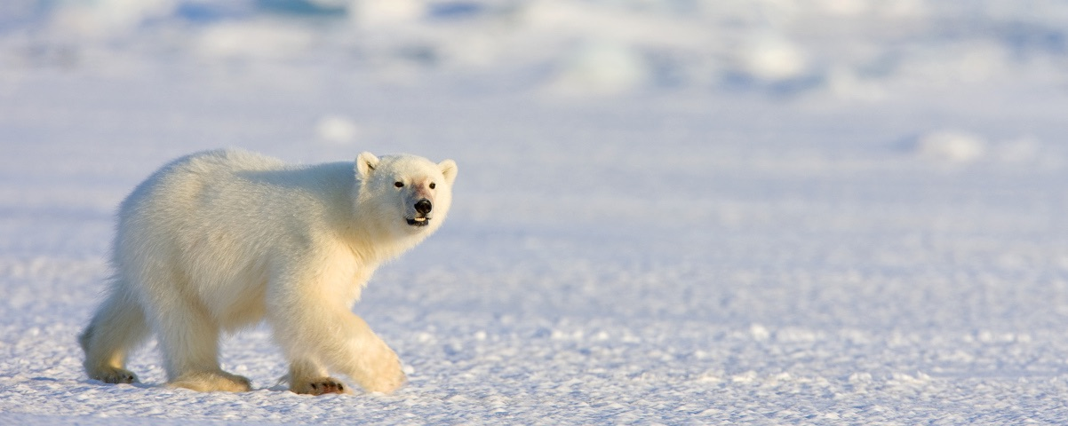 Private Tours in Svalbard