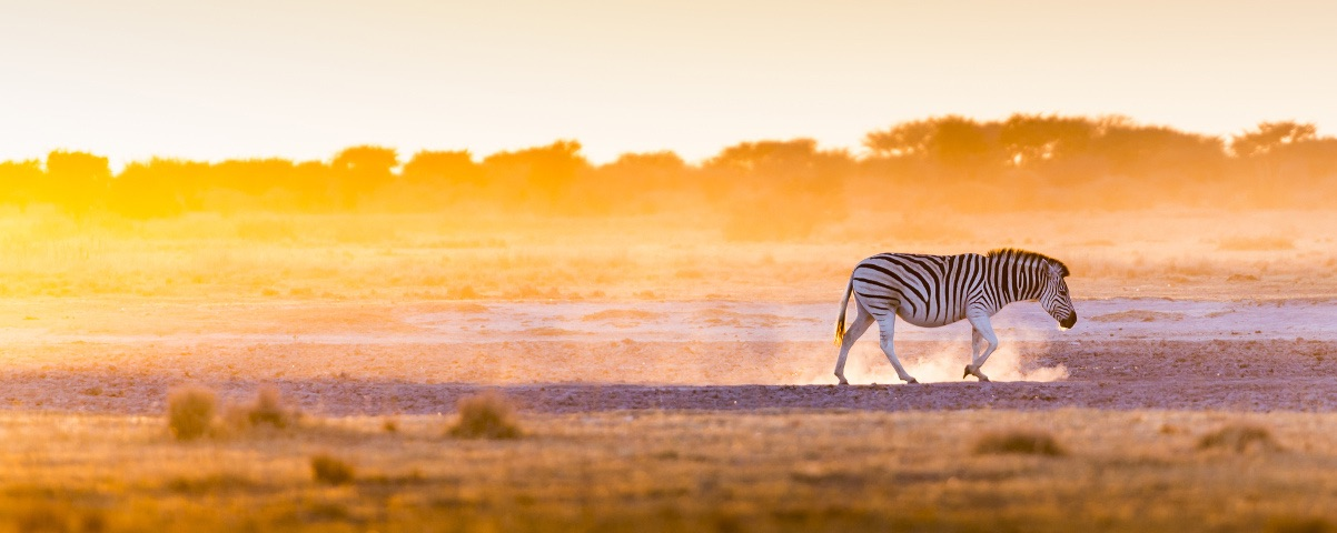 Private Tours in Botswana