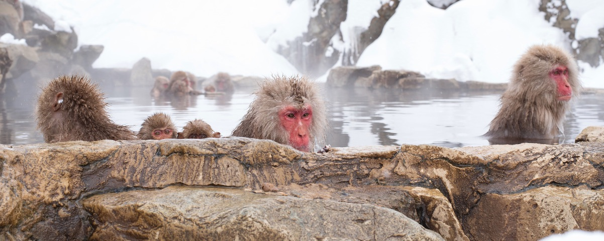 Private Tours in Snow Monkeys