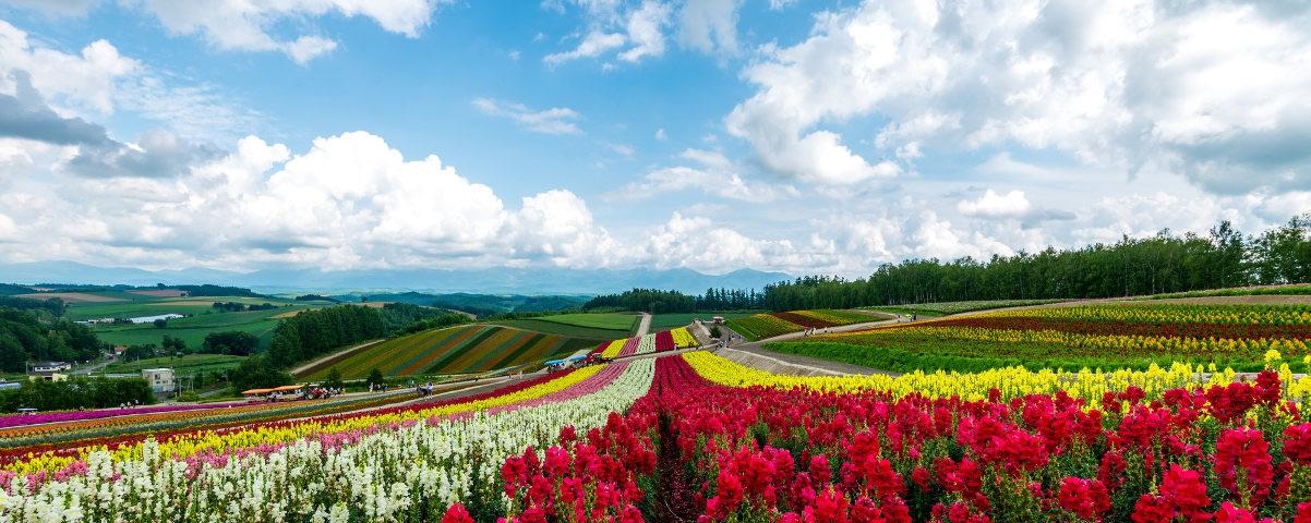 Private Tours in Hokkaido