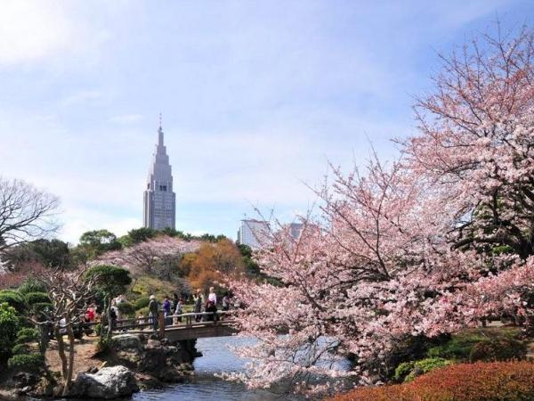 Hanami - Private Cherry Blossom Viewing Tour in Tokyo