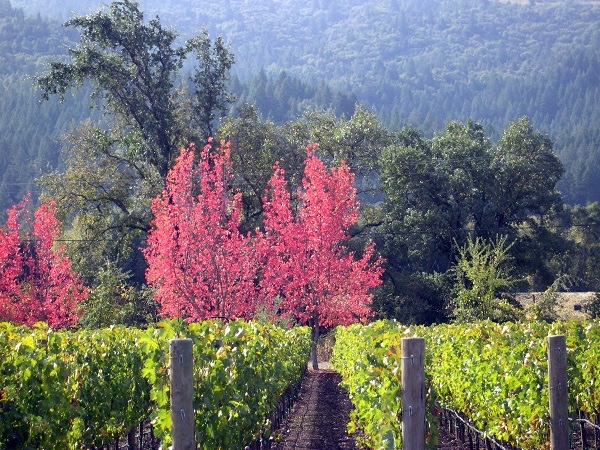 Beautiful Napa - Private Napa Valley Tour