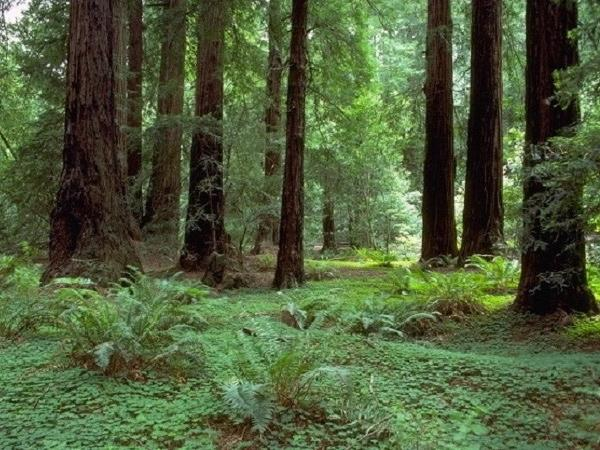 Those Magnificent Redwoods - Private Muir Woods Tour