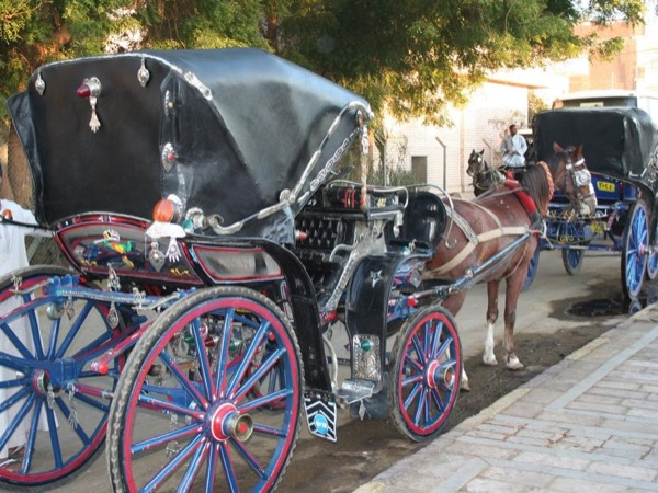 Enjoy a City Tour by a Horse Carriage.