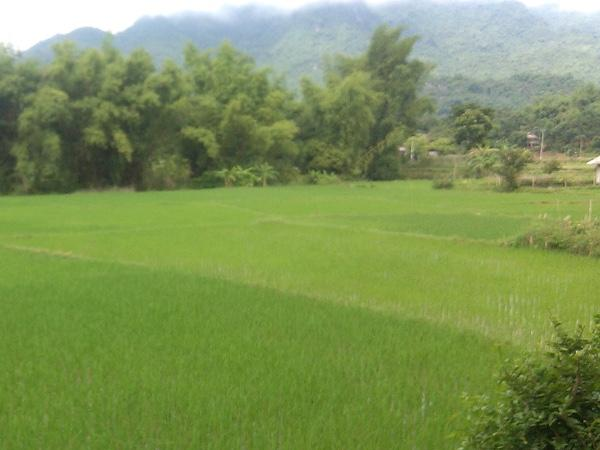 Mai Châu village Private Tour