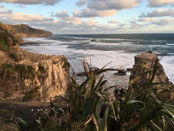 West Coast Beaches, Black Sand, Surf and Birds