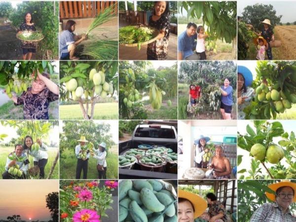 Agrotourism & Ayutthaya