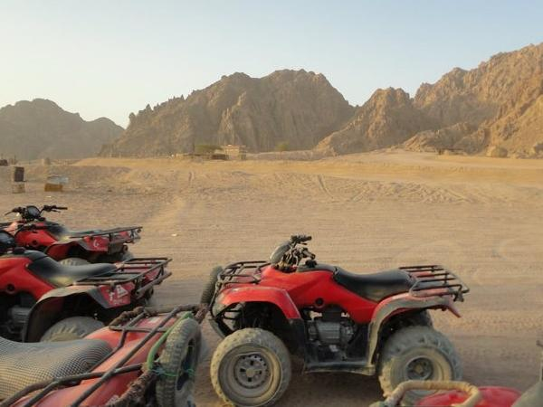Quad bike safari .
