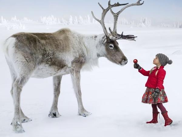 Reindeer and Finnish classical art & architecture. Available most days.