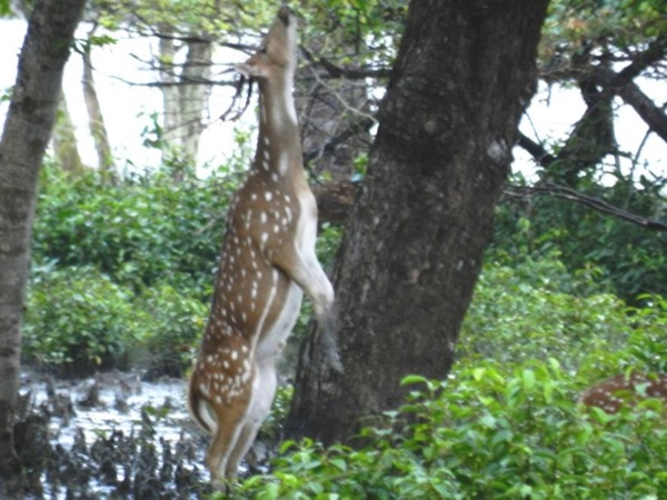 Excursion to Sundarbans ( 2 Nights/ 3 Days)