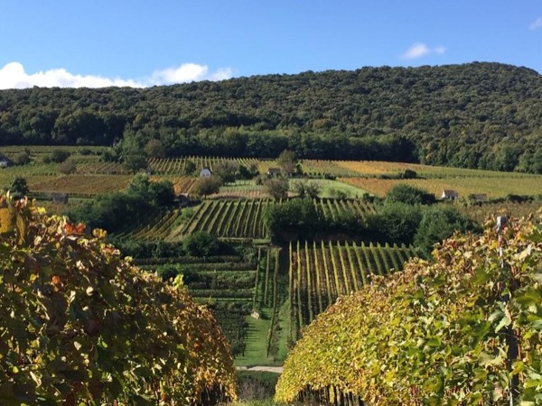 Private wine tour to Tokaj or Villany wine regions