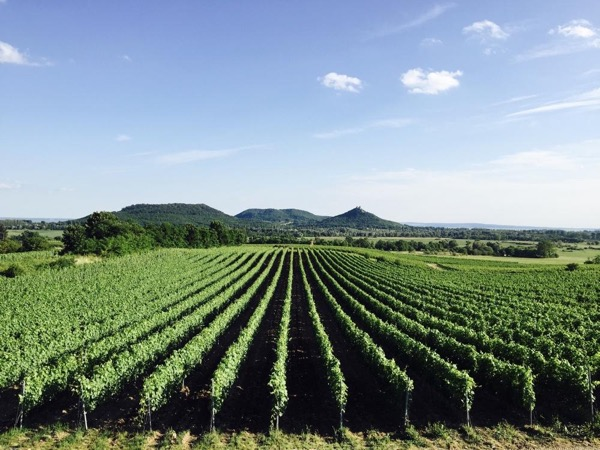 Wine and Culinary tour in the Hungarian countryside