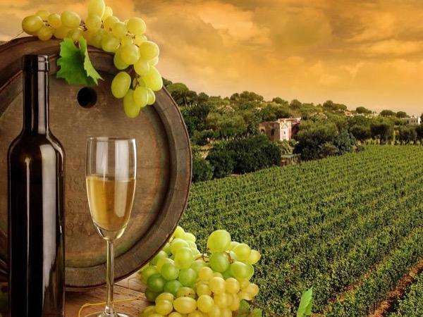 Chianti Wine tour - Shore Excursion from La Spezia port