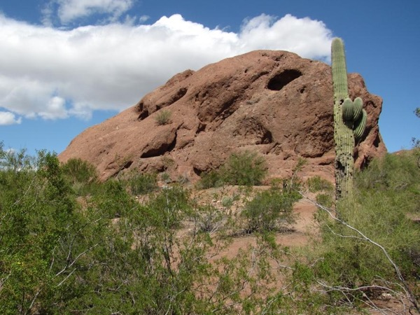 Phoenix City Tour + Desert Botanical Gardens