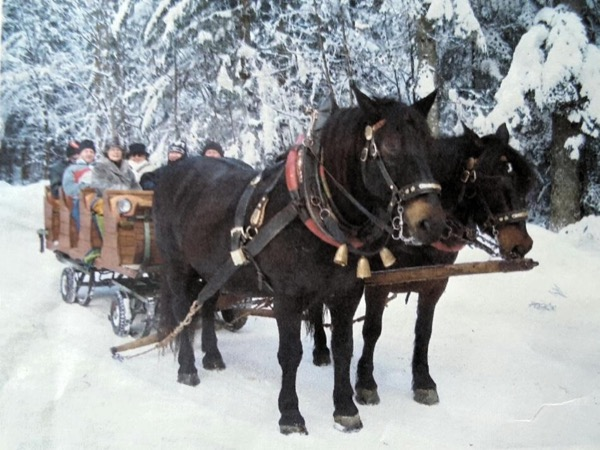 Horse Sleigh Ride Tour