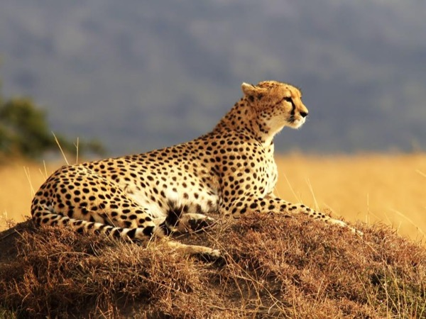 Safari Package - private tour