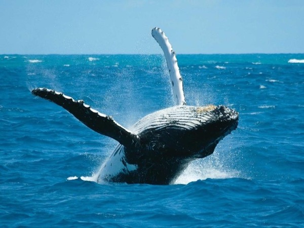 Whale Watching - private tour