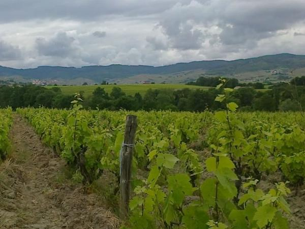 A private full day in the Beaujolais