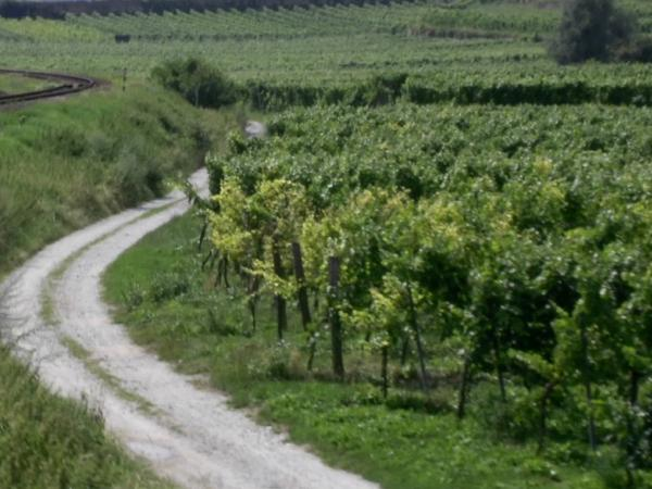 Small Towns and Great Wines Private tour