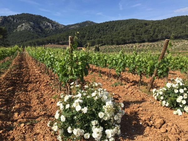 Vinyards, wine tasting and provencal villages. 6 hours with private guide