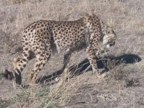 Moremi/Okavango Oddessy - 4 Days