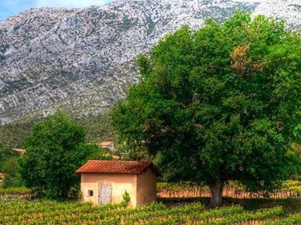 Château La Coste and Aix-en-Provence - 6 hours