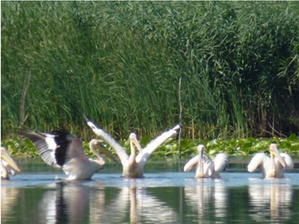 3 days Danube Delta Tour