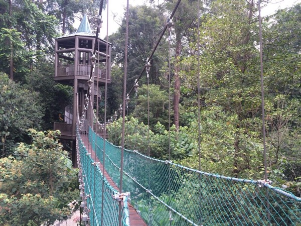 Visit a Local Market, experience a Canopy Walk in a Rainforest and A flight up the KL Tower