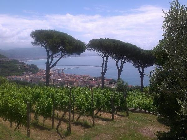 Private tour in Pompeii and wine tasting on Amalfi coast