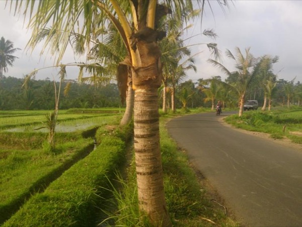 Ubud Countryside Private Tour